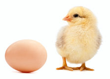 Egg and chicken isolated on a white Stock Images