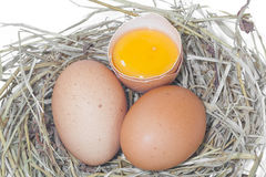 Egg. Of chicken on nest Stock Image