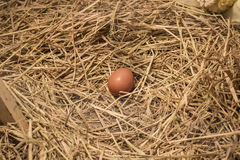 An egg in chicken nest. Freshen up the day with fresh egg Royalty Free Stock Photo