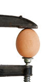 Egg in clamp (isolated) Stock Photos