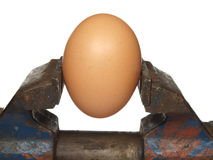 Egg is clamped in the old vice stock photos