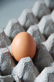 Egg. The close up of egg on carton tray Royalty Free Stock Photography