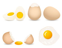 vector egg collection Royalty Free Stock Photos