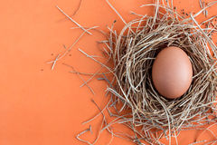 Egg on a colored background. Stock Photos