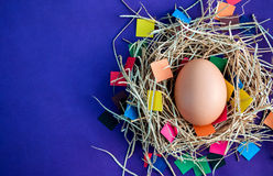 Egg on a colored background. Stock Photo
