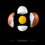 Egg components Royalty Free Stock Photos