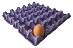 Egg in container panel. A single brown egg in purple container panel Royalty Free Stock Images
