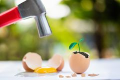 egg crack after hammer hit with young plant growing in egg shell, easter concept royalty free stock images