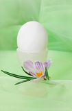 Egg and crocus Royalty Free Stock Images