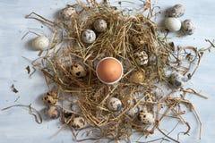 Egg dans le nid de foin sur le vieux fond en bois de table Image libre de droits
