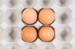 Egg dans une caisse d'oeufs sur le fond blanc Photos libres de droits