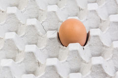 Egg dans une caisse d'oeufs sur le fond blanc Photographie stock libre de droits