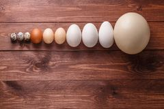Egg of different birds on a farm Royalty Free Stock Photos