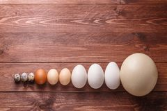 Egg of different birds on a farm Stock Photography