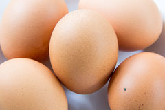 Egg on dish Stock Images