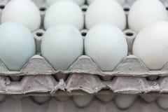 Egg of duck Stock Image