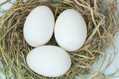Egg of duck. On nest Royalty Free Stock Photos