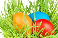 Egg easter in a grass Isolated on white Stock Images