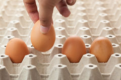 egg in egg tray Royalty Free Stock Photo