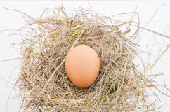 Egg. S laid on the hay Stock Photos