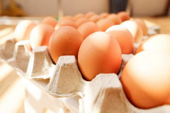 Egg. S in the  tray Royalty Free Stock Photo