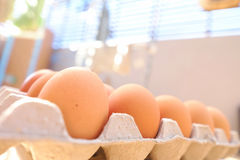 Egg. S in the  tray Stock Images