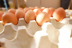Egg. S in the  tray Royalty Free Stock Image