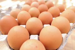 Egg. S in the  tray Royalty Free Stock Photography