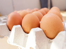 Egg. S in the  tray Stock Photos