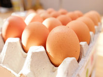 Egg. S in the  tray Stock Photography