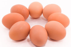 8 Egg Royalty Free Stock Images