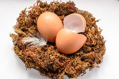 Egg and eggshell in the nest Stock Image