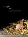 Egg em um ninho da palha dourada na madeira contra um fundo escuro Fotografia de Stock Royalty Free