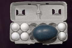 Egg of the Emu (Dromaius novaehollandiae). An Emu (Dromaius novaehollandiae) egg is shown with several chicken eggs Stock Photo