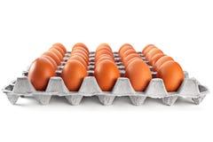 Egg en rectángulo del cartón Fotografía de archivo libre de regalías