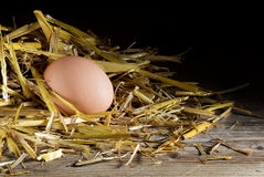 Egg en una jerarquía de la paja contra un fondo oscuro Fotografía de archivo libre de regalías