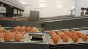 Egg factory stock footage