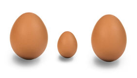 Egg Family Royalty Free Stock Photography