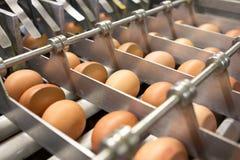 Egg farm Royalty Free Stock Photos
