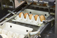 Egg farm Royalty Free Stock Photos