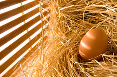 Egg in farm straw. With early light Stock Photography
