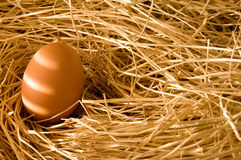 Egg in farm straw. With early light Royalty Free Stock Images