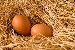 Egg in farm straw. With early light Stock Image