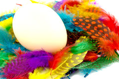 Egg and feathers Stock Image