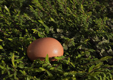 Egg in a field of leafs. Stock Photos