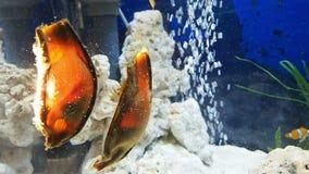 Egg fish hatching underwater. Egg of fish hatching underwater stock video