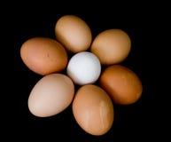 Egg flower. Farm fresh eggs arranged in a flower pattern royalty free stock photos