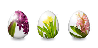 Egg with flower ornament  over white Royalty Free Stock Photography