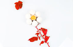 Egg flower Royalty Free Stock Photos