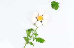 Egg flower Royalty Free Stock Photo